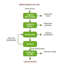 selecaograos_infografico1